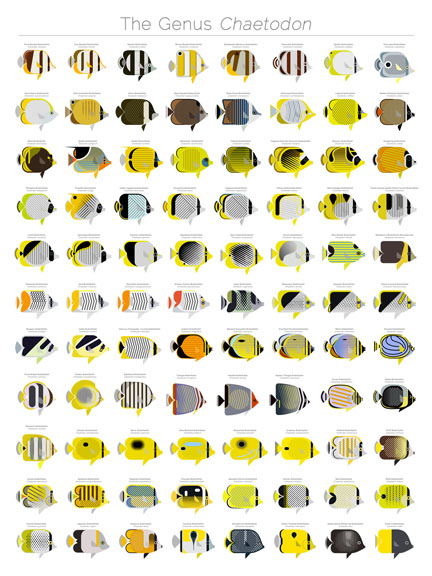 chaetodon - butterflyfishes - scott partridge