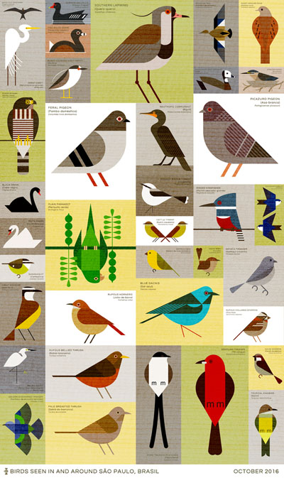 sao paulo birds illustration