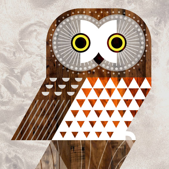 Scott Partridge - Illustration - Saw Whet Owl