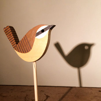 wood wren - scott partridge